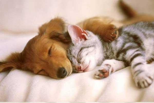 Kedi-Köpek Temini
